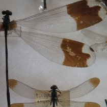 Image of Insects - 92.0430.877