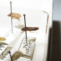 Image of Insects - 92.0629.1076