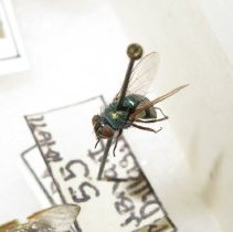 Image of Insects - 92.0659.1106