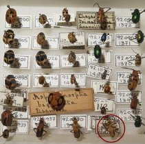 Image of Insects - 92.0679.1126