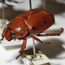 Image of Insects - 92.0724.1171