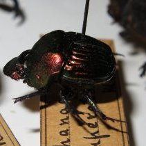 Image of Insects - 92.0745.1193