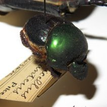 Image of Insects - 92.0754.1202