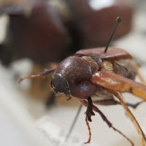 Image of Insects - 92.0896.1364