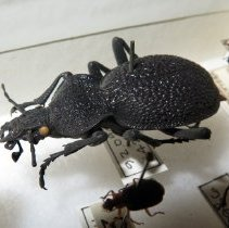 Image of Insects - 92.0961.1429