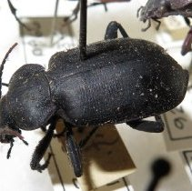 Image of Insects - 92.0972.1440