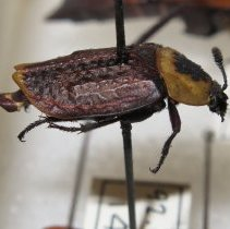 Image of Insects - 92.0981.1449