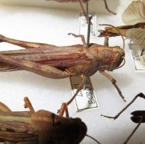 Image of Insects - 93.0303.1577