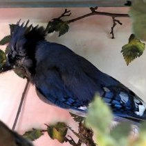 Image of Birds - 93.0576.1346