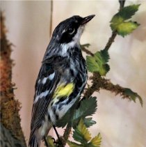Image of Birds - 93.0578.1348