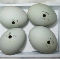 Image of Eggs - 79.038.14