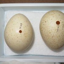 Image of Eggs - 79.163