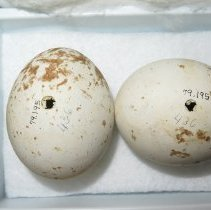 Image of Eggs - 79.195