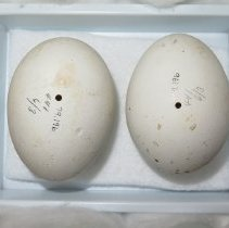 Image of Eggs - 79.196