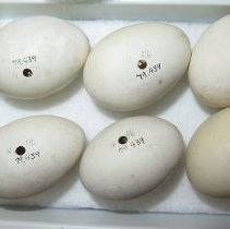 Image of Eggs - 79.439.157