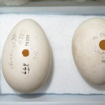 Image of Eggs - 79.577.471