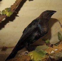 Image of Birds - 93.0564.1334