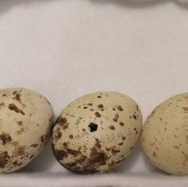 Image of Eggs - 79.155