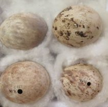 Image of Eggs - 79.198
