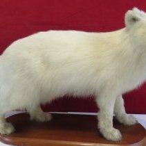 Image of Mammals - 72.0060.28