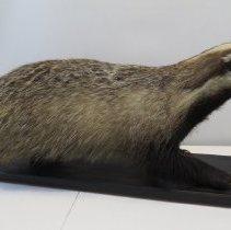 Image of Mammals - 72.0066.7