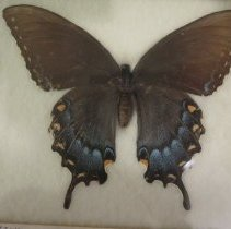 Image of Insects - 92.0854.1322