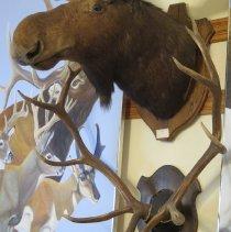 Image of Mammals - 94.0121.104