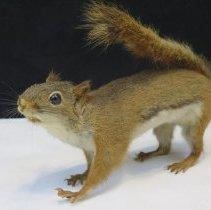 Image of Mammals - 94.0157.145