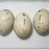 Image of Eggs - 79.035