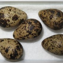 Image of Eggs - 79.065.24