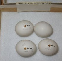 Image of Eggs - 79.188.387