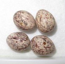 Image of Eggs - 79.214.68
