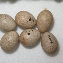 Image of Eggs - 79.248