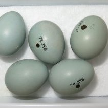 Image of Eggs - 79.298