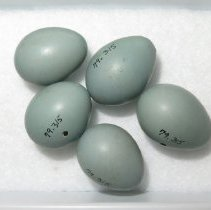 Image of Eggs - 79.315