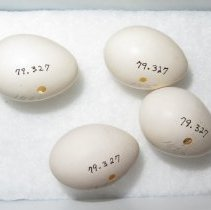 Image of Eggs - 79.327