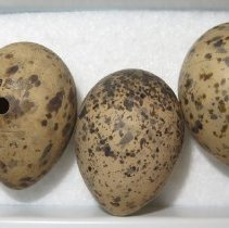 Image of Eggs - 79.357.120