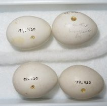Image of Eggs - 79.430