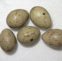 Image of Eggs - 79.529