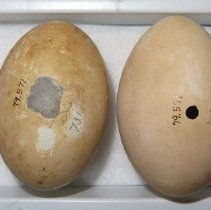 Image of Eggs - 79.571