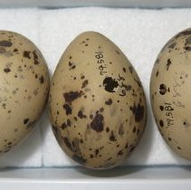 Image of Eggs - 79.581
