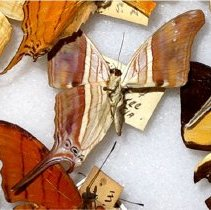 Image of Insects - 92.0127.576
