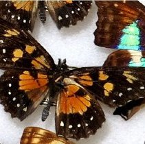 Image of Insects - 92.0228.677