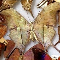 Image of Insects - 92.0290.739