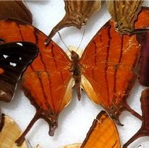 Image of Insects - 92.0301.750