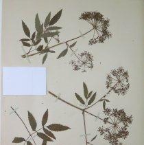 Image of Botany - 94.0195.29