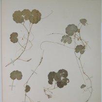 Image of Botany - 94.0201.35