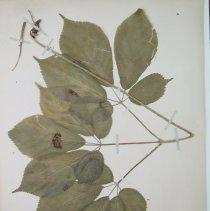 Image of Botany - 94.0204.38