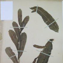 Image of Botany - 94.0311.144