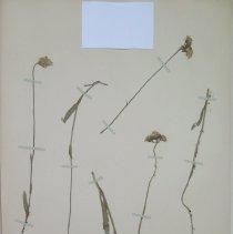 Image of Botany - 94.0338.171